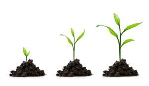 SME Growing